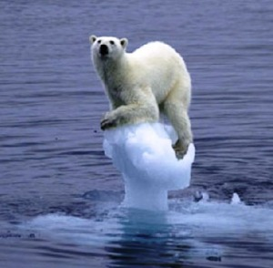 polar-bear-on-ice4